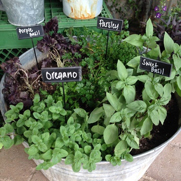 How to Grow Herbs & Veggies in Containers