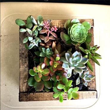 Small Succulent Planter Box
