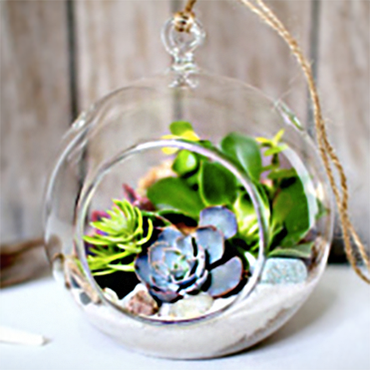 Terrarium Building Workshop with Succulents