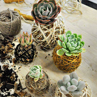 Kokedema (Bonsai) Workshop- Floral Design with Succulents